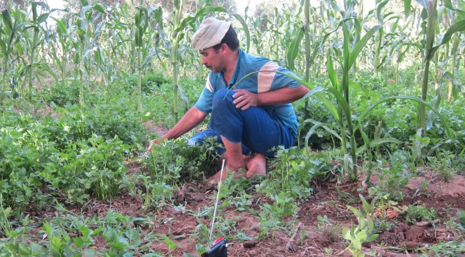 Agriculture familiale : transformation et continuité