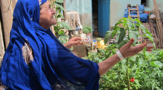 « Fertilités. Sur les chemins de collecte des femmes oasiennes (univers végétal, résonateurs cosmiques, soins collectifs) »